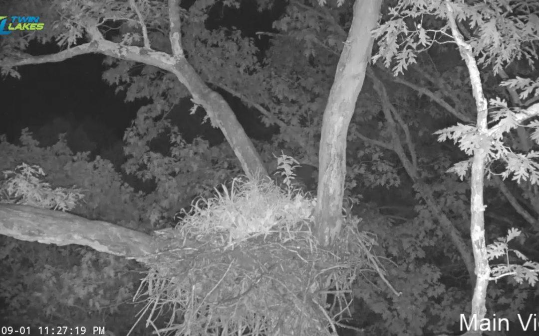 Dale Hollow Eagle Cam Live Stream (Test Stream)