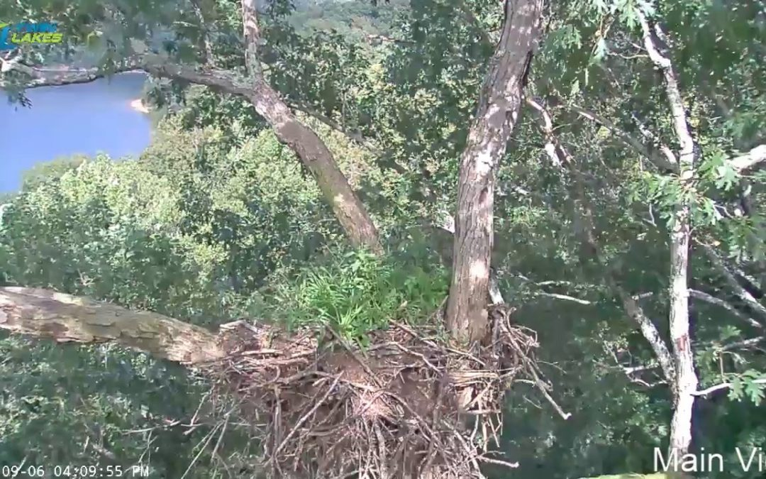 Dale Hollow Eagle Cam (Test Live Stream)