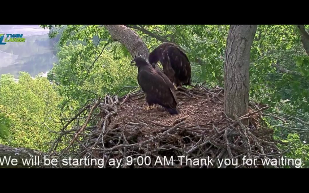 Dale Hollow Eagle Camera Live Event.