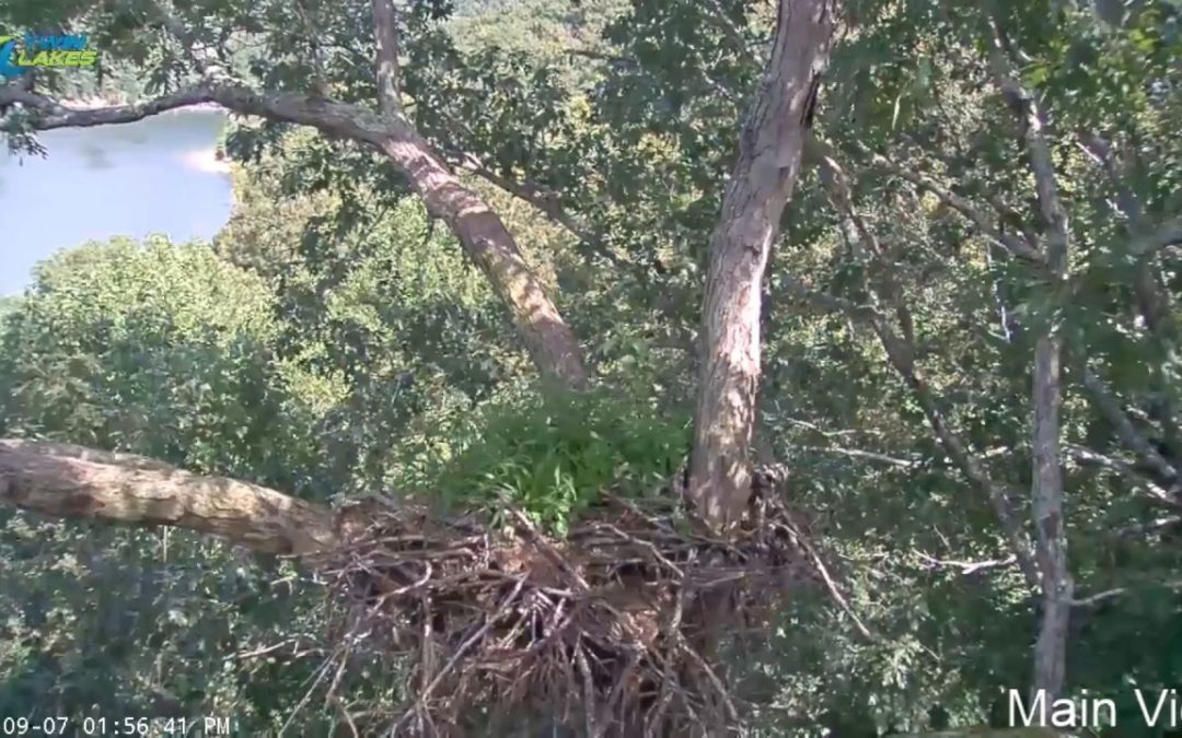 Dale Hollow Eagle Cam (Test Stream)