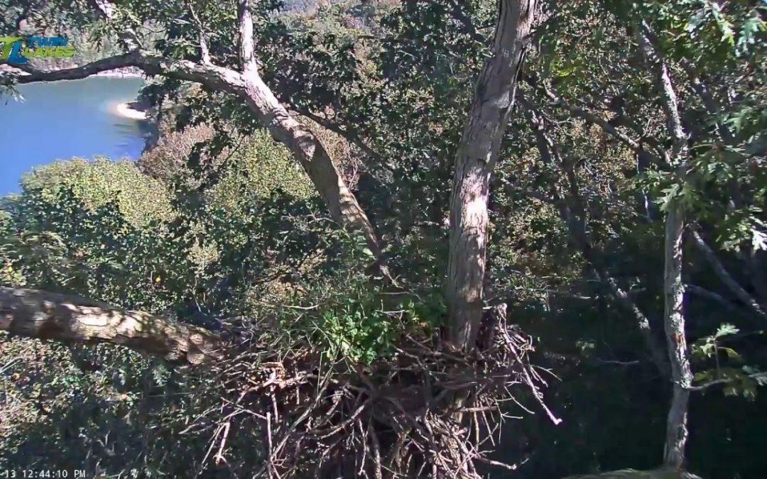 Dale Hollow Eagle Cam Live Stream – Camera 2