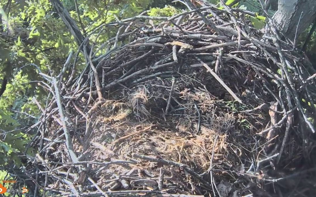 Time lapse of Hanover nest failure 5/31/16