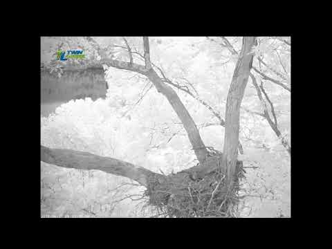 DHEC ~ Collapse Of The Nest 2018 06 21