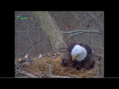 1/23/18..DHEC ~ First Egg Of Season 2 ..1:58 pm