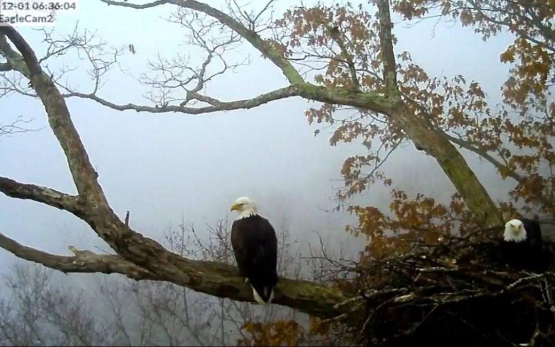 Great capture Melanie ! Foggy Morning