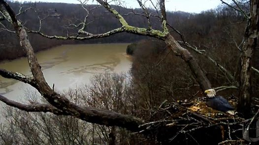 The rain has turned Dale Hollow Lake from blue to brown and has soaked one of th…