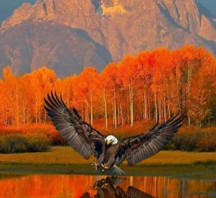 Eagle at Grand Teton National Park. Mount Moran in the background.  Wyoming, USA