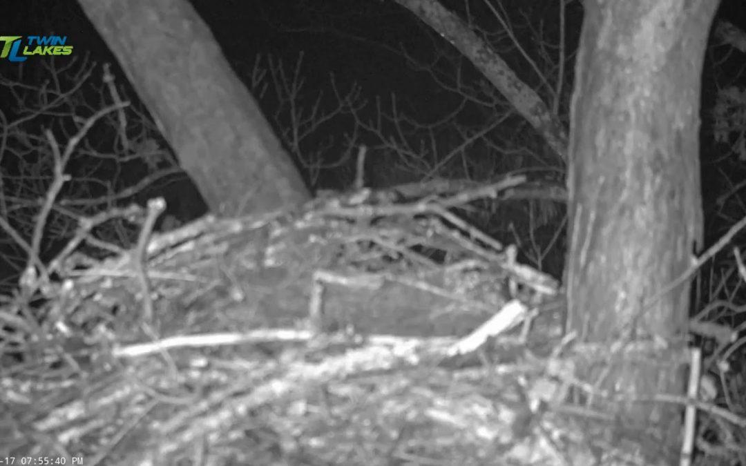 Dale Hollow Eagle Cam Live Stream Cam 1