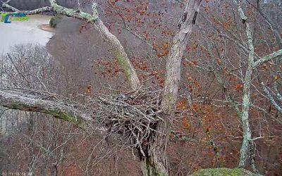 Dale Hollow Eagle Cam Live Stream