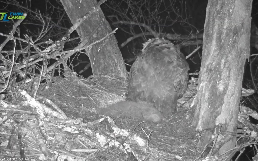 Dale Hollow Eagle Camera Live Stream