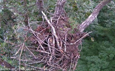 Dale Hollow Eagle Camera Live Stream